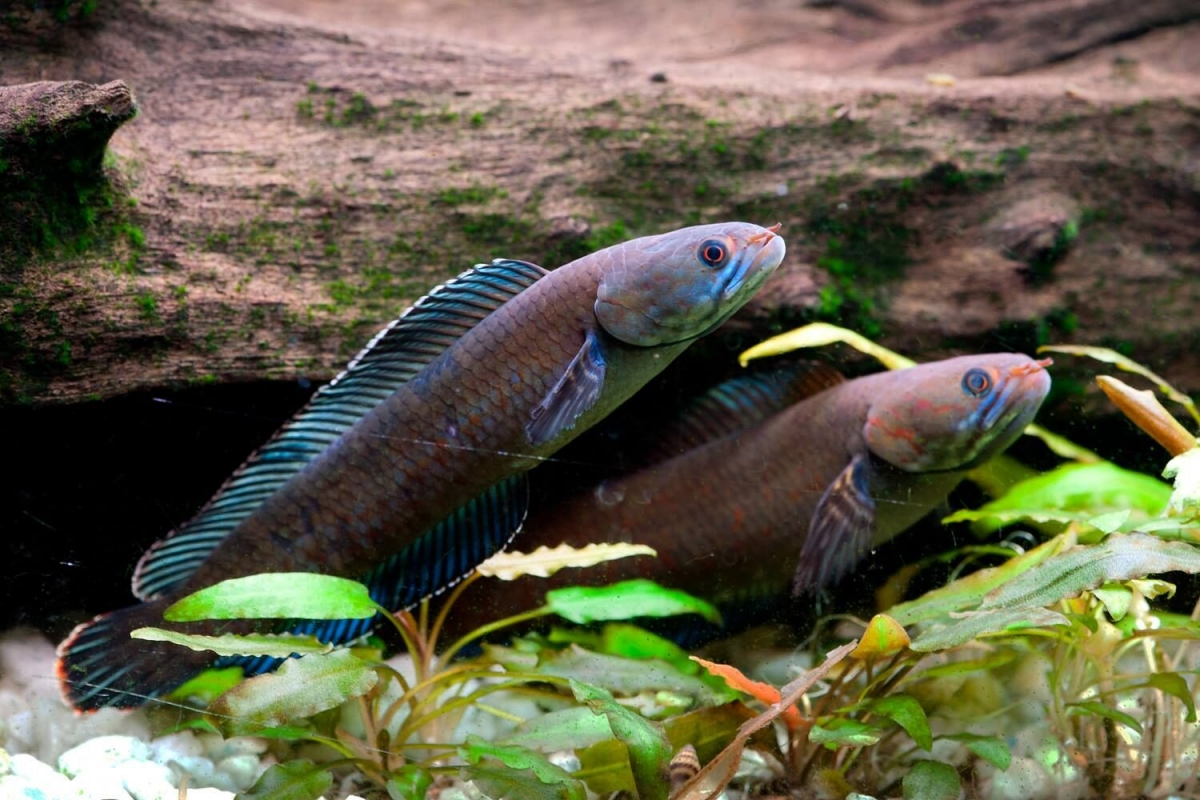Fish That Walks On Land Among 200 New Species Discovered