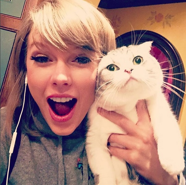 Taylor Swift and her cat on Instagram