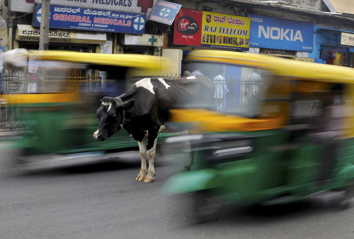 India beef