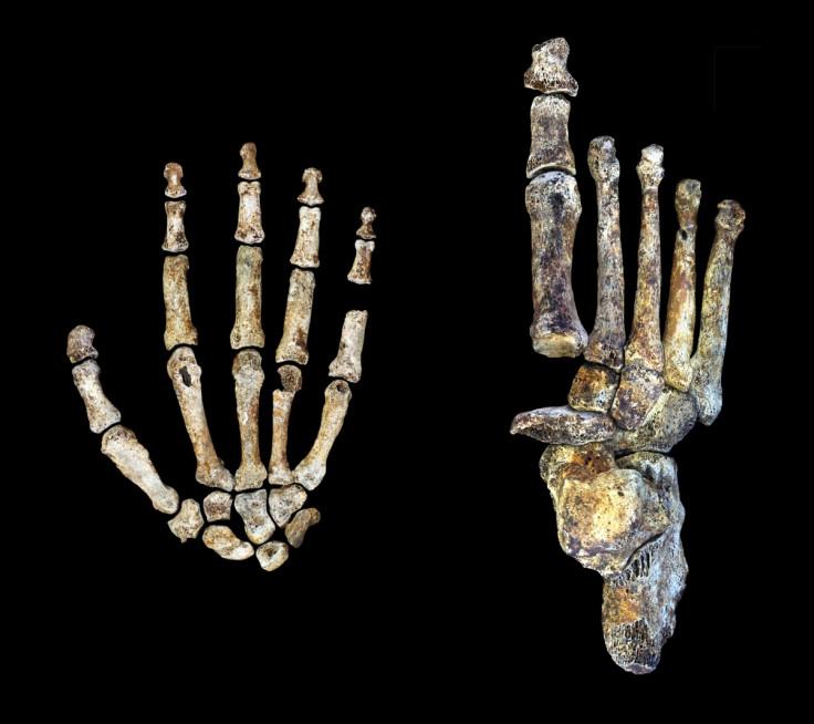 naledi hands