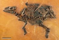horse fossil