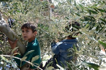 Syrian children olive oil