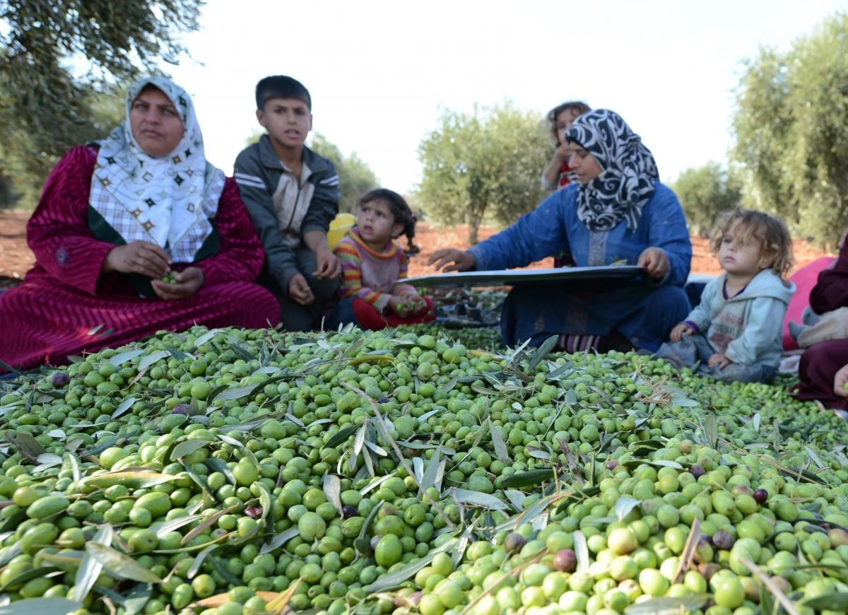 Syria war olive