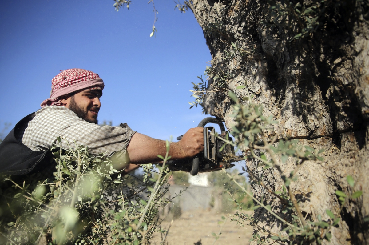 Syria civil war olive trees