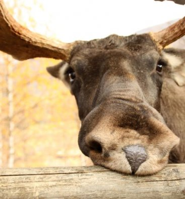 Moose in park killed by hunter