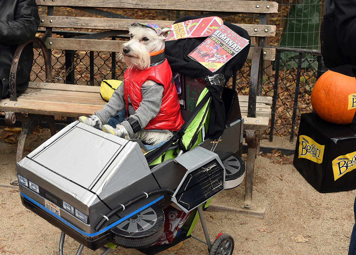 Halloween 2015 Pet Costume Ideas At New Yorks Tompkins Square Dog