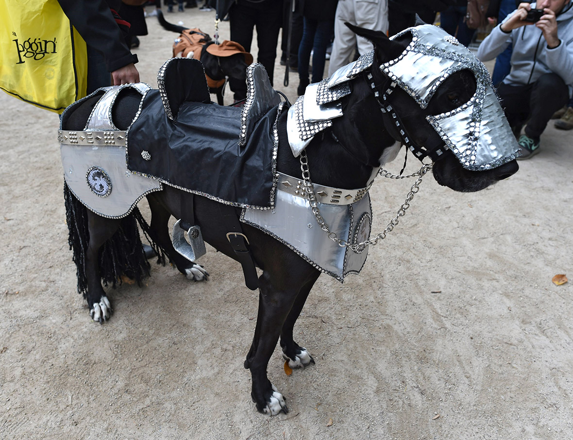 Halloween 2015 Pet costume ideas at New Yorku0027s Tompkins Square Dog Parade [Photos] & Halloween 2015: Pet costume ideas at New Yorku0027s Tompkins Square Dog ...