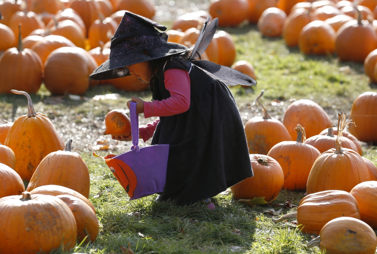 Child picking pumpkins in a field