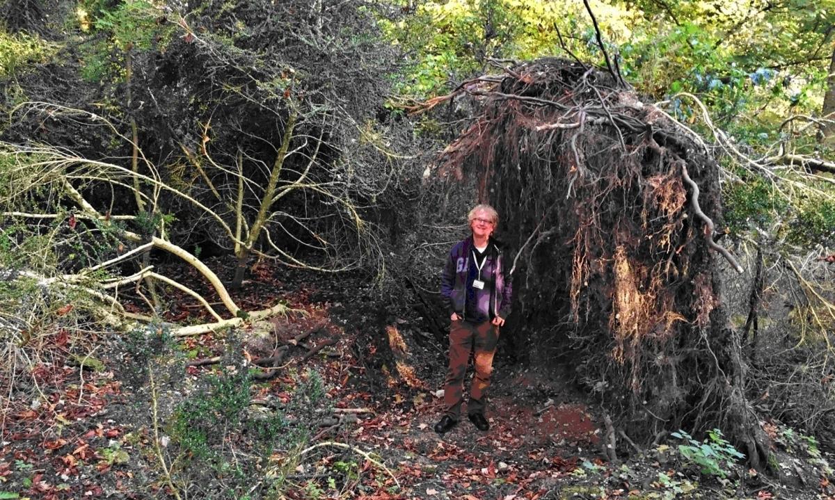 eco-home stonehenge