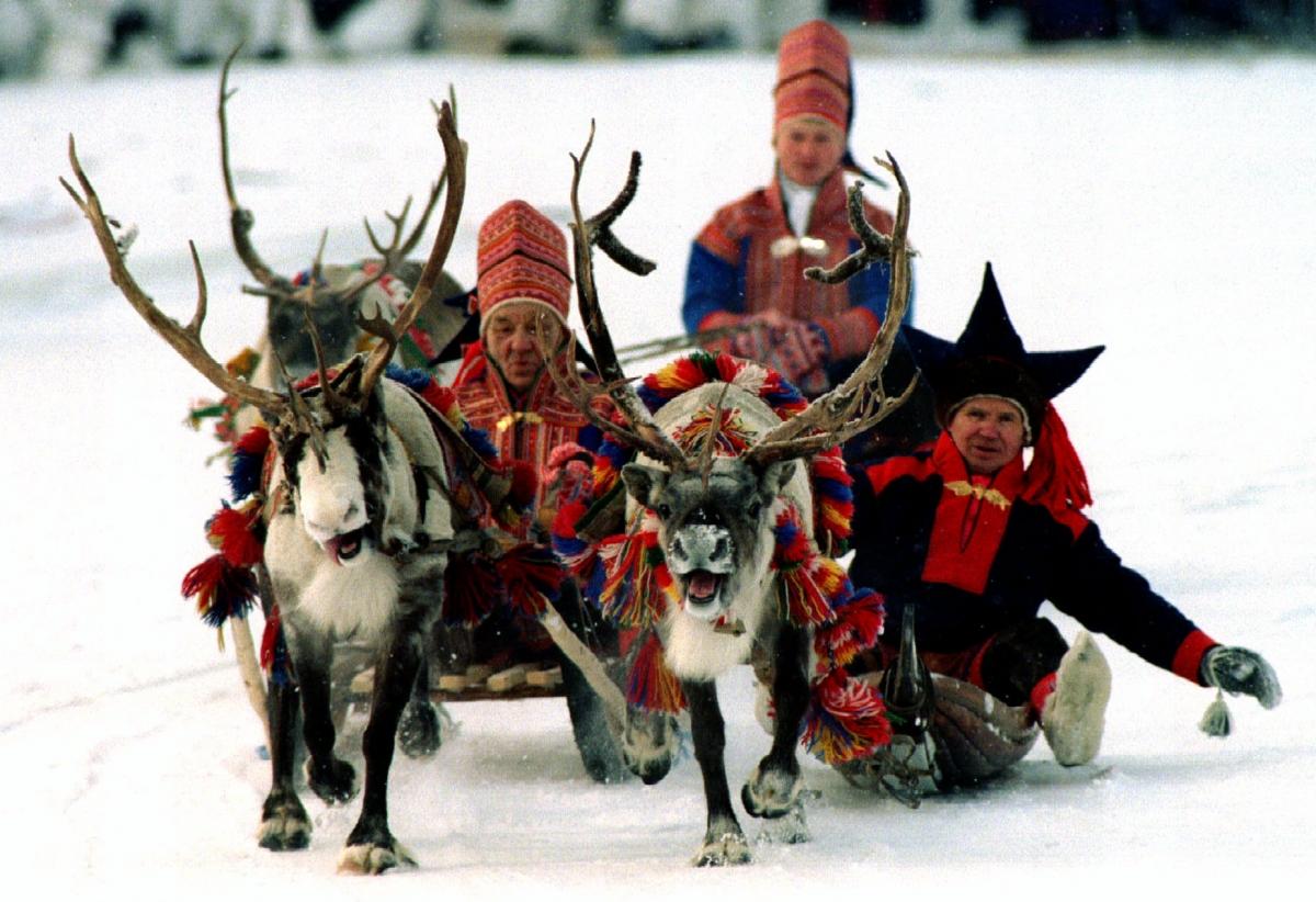 sami and reindeer