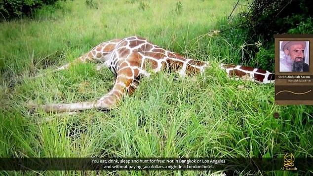 Dead jihadi giraffe