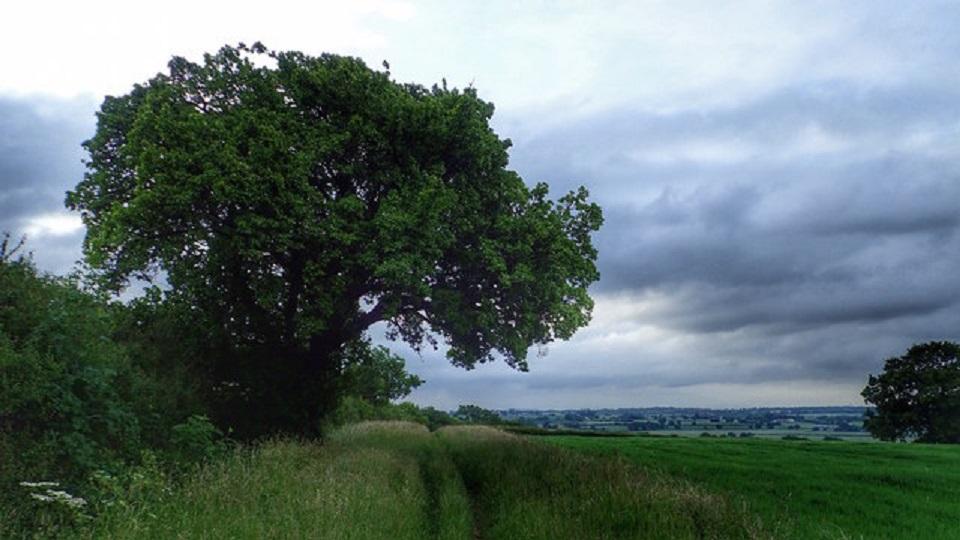 The Cubbington Pear tree