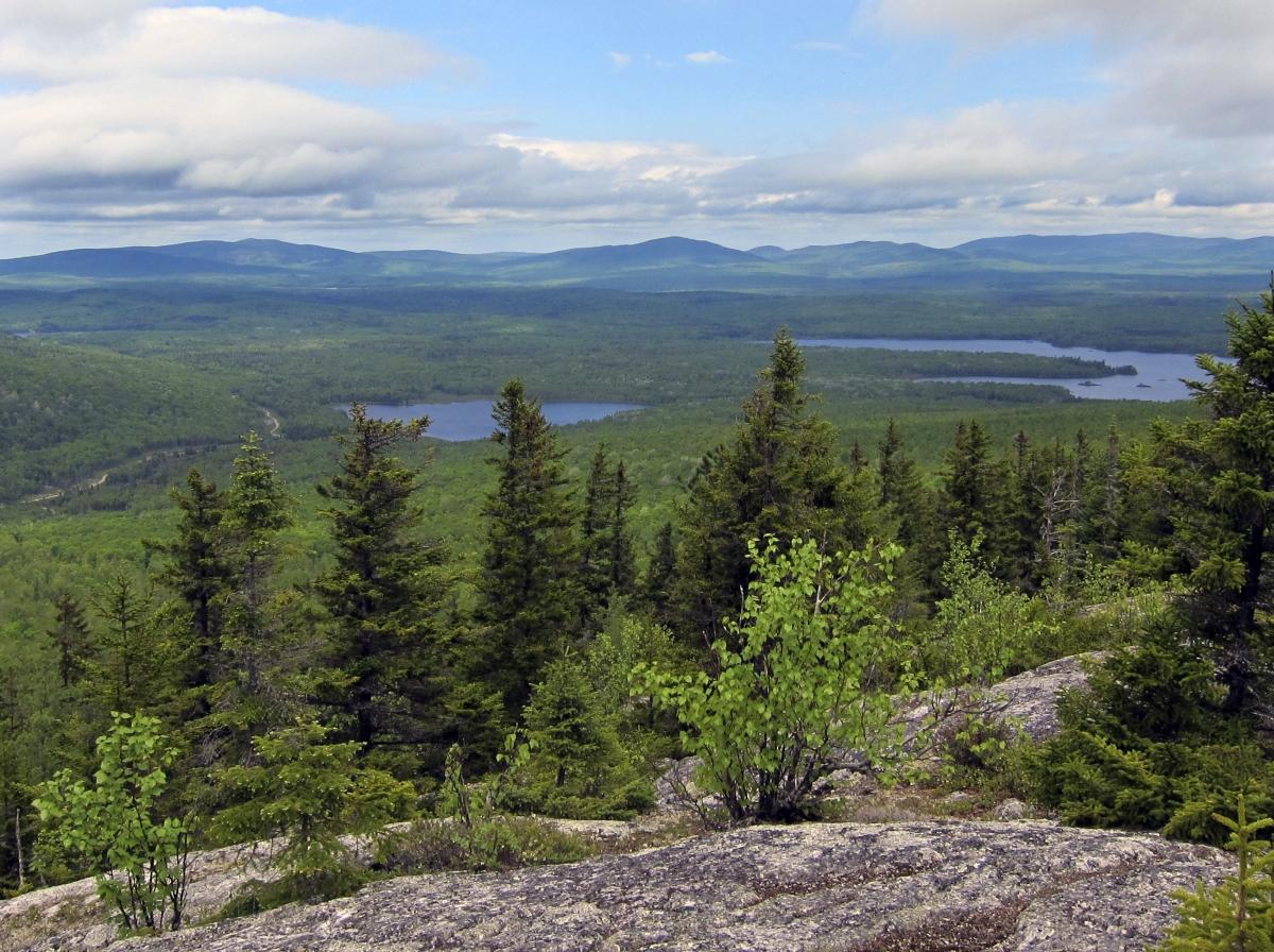 Weyerhaeuser to buy Plum Creek, creating a $23bn timberland giant