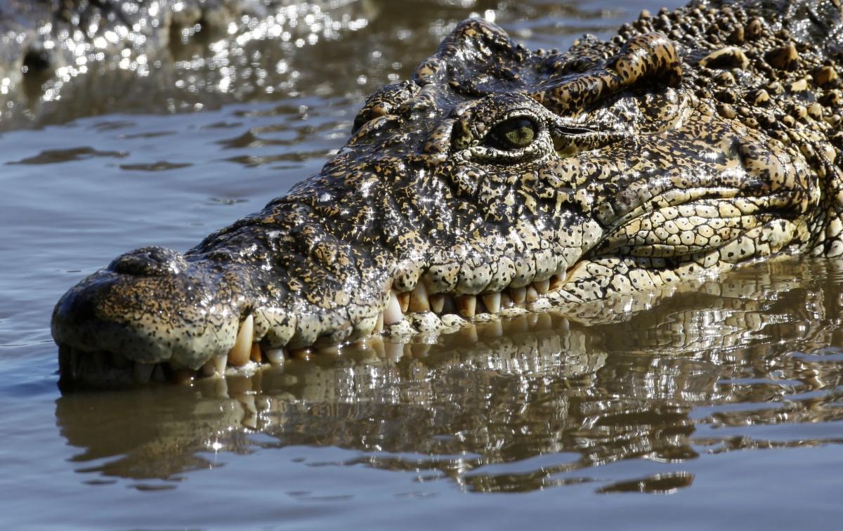 Hiring: Fierce looking crocodiles