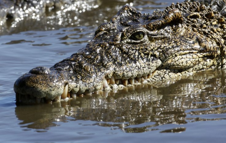 Hiring: Fierce looking crocodiles