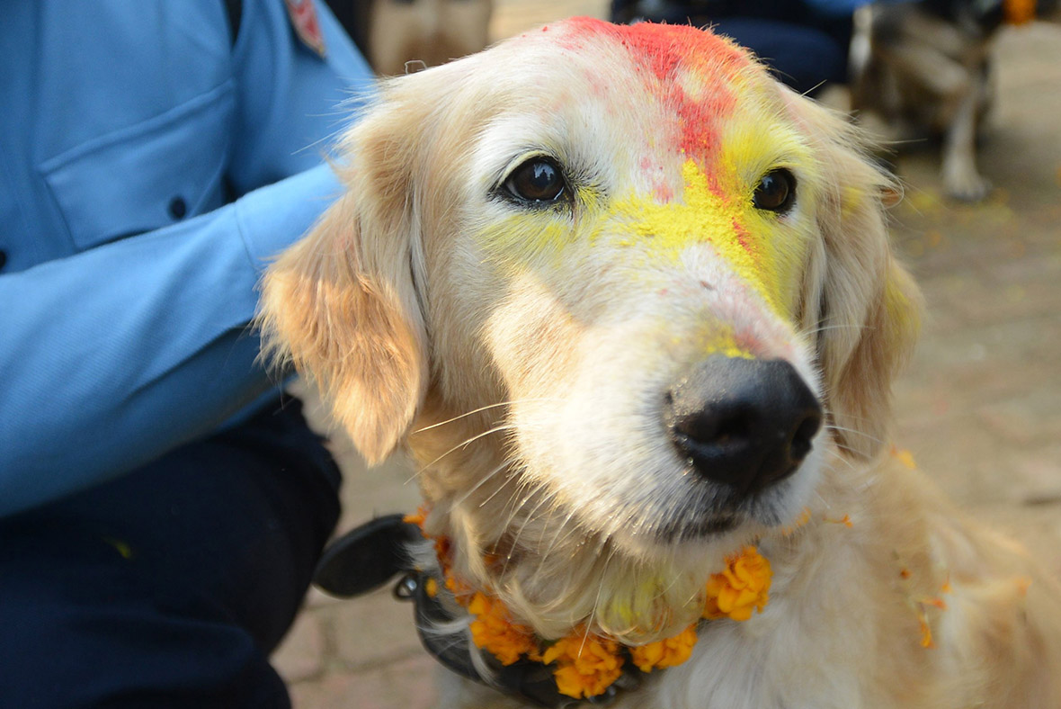 Nepal Police Dogs Are Blessed To Celebrate Hindu Festival