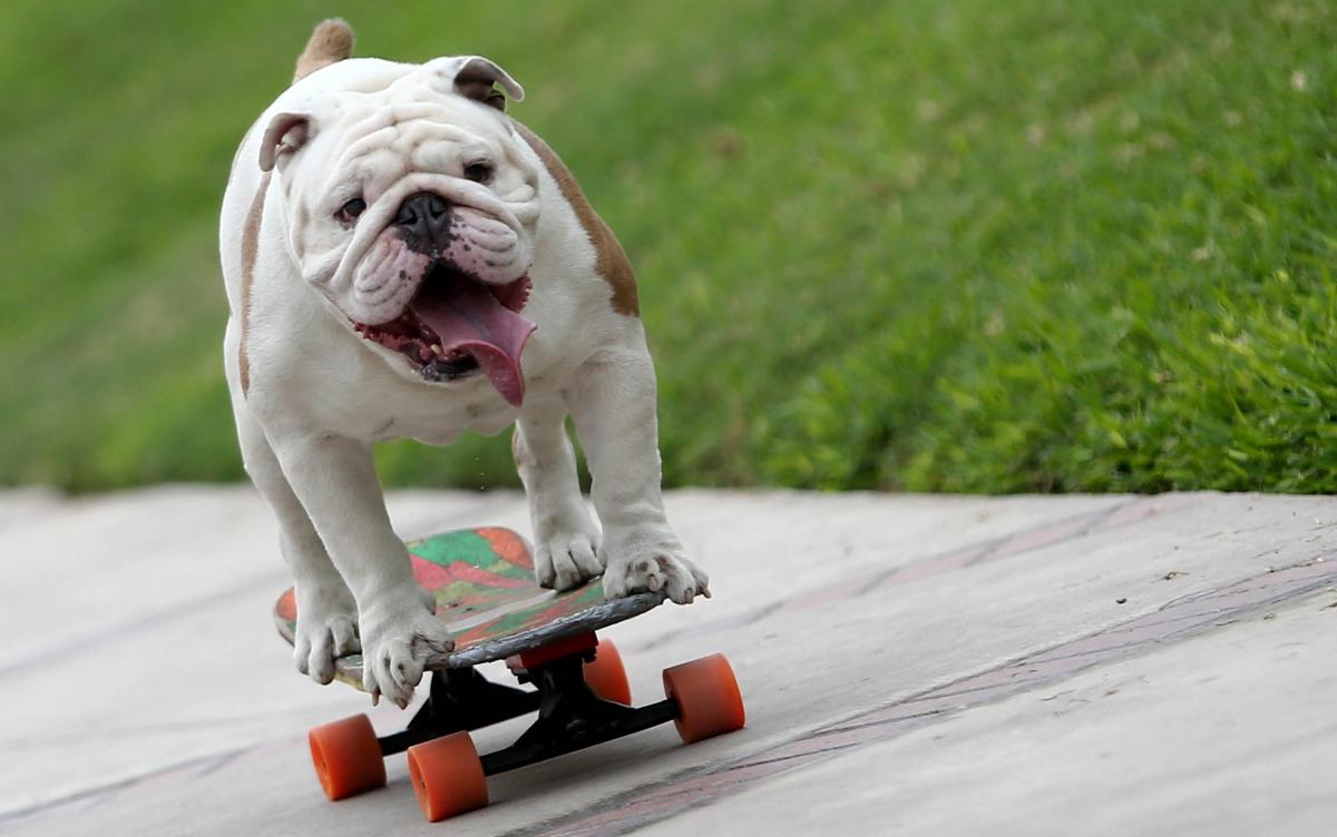 Skateboarding dog breaks Guinness World Record