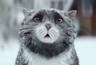 Sainsburys christmas campaign with Mog