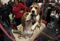 Beagles experiment