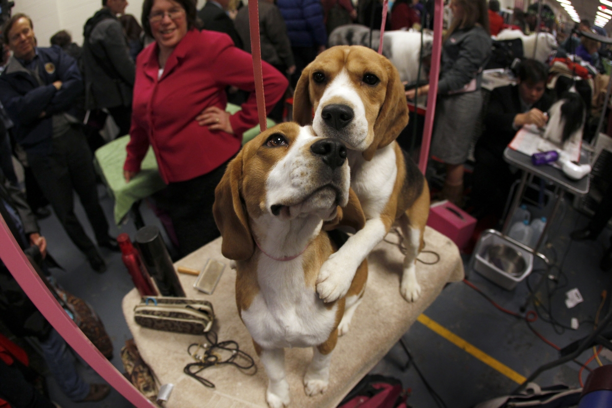 Beagles experiment