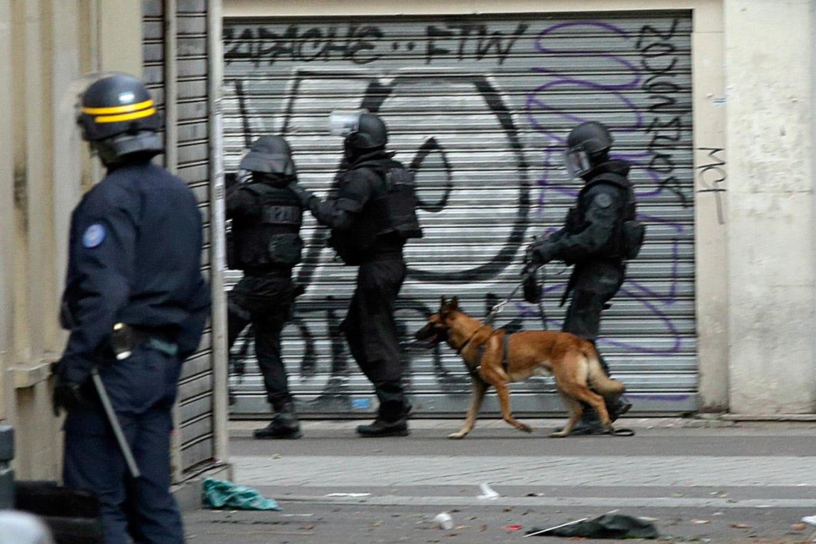 France police dog