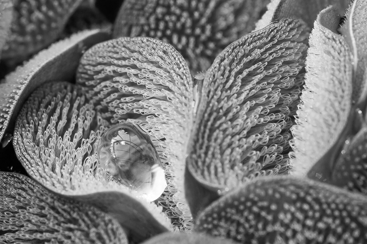 Royal Society Publishing photography competition