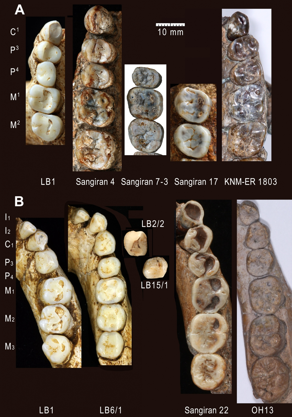 hobbit teeth
