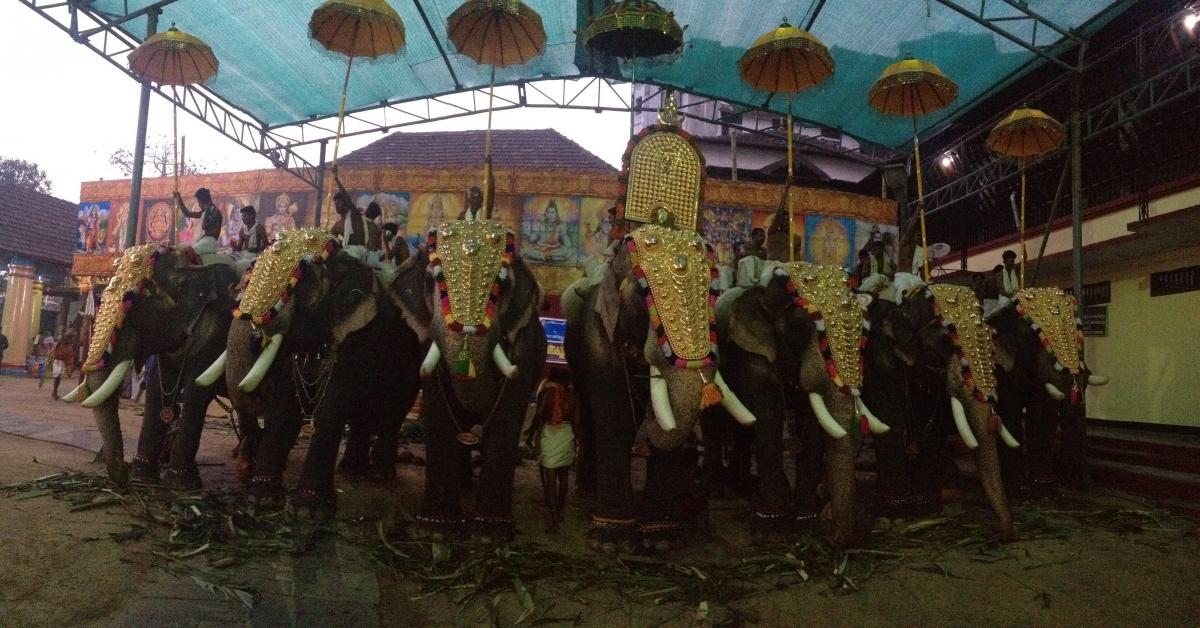 TEMPLE ELEPHANTS