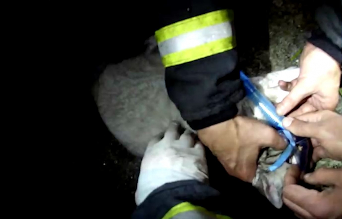 Firefighters Save a Cat