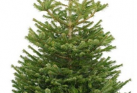 how to buy a christmas tree