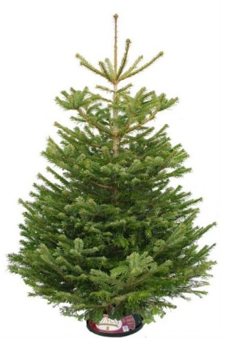 realistic christmas trees tree shopping where and what to buy best real 28898