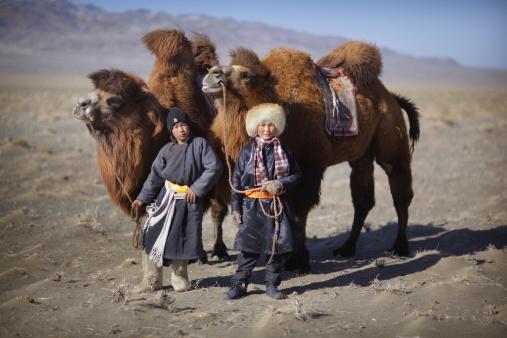 Camel coaxing Mongolia