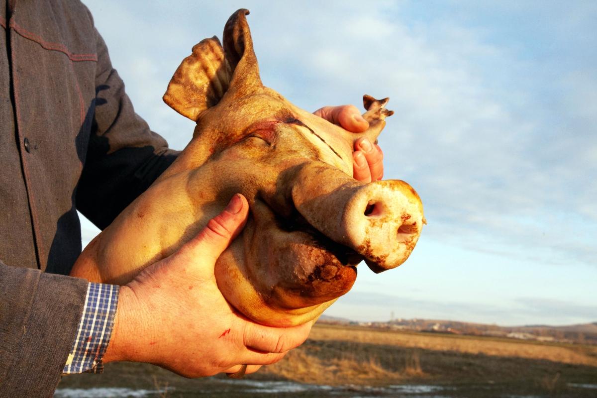 Man holding a pig head