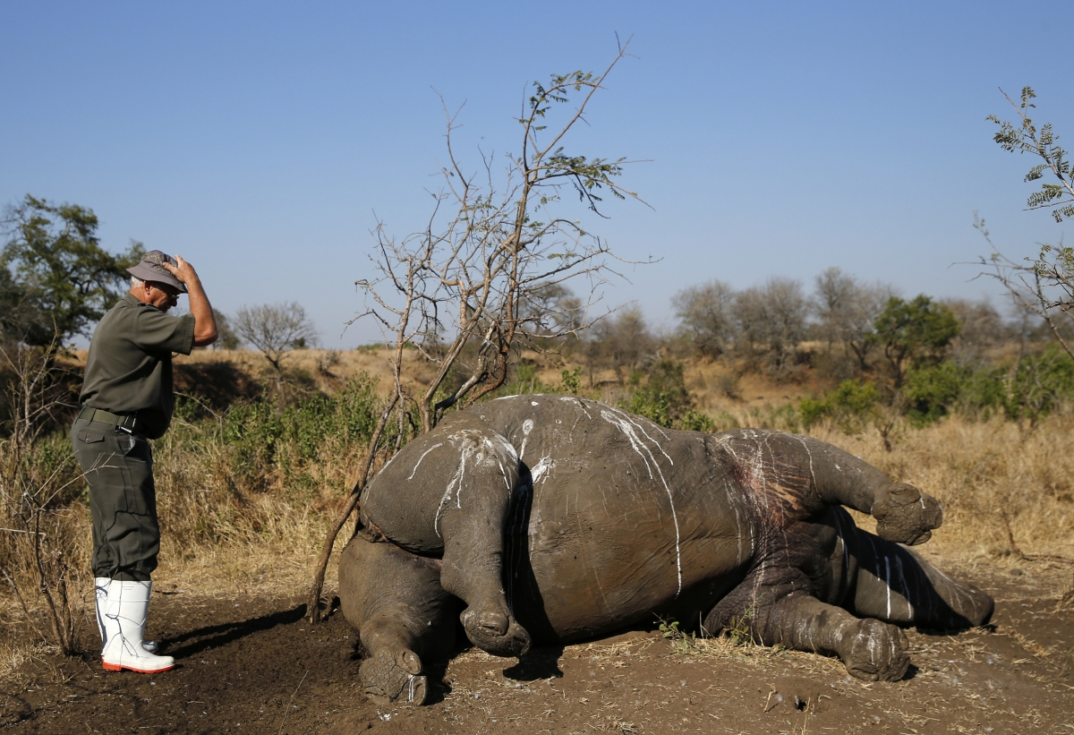 dead rhino in Kruger Park