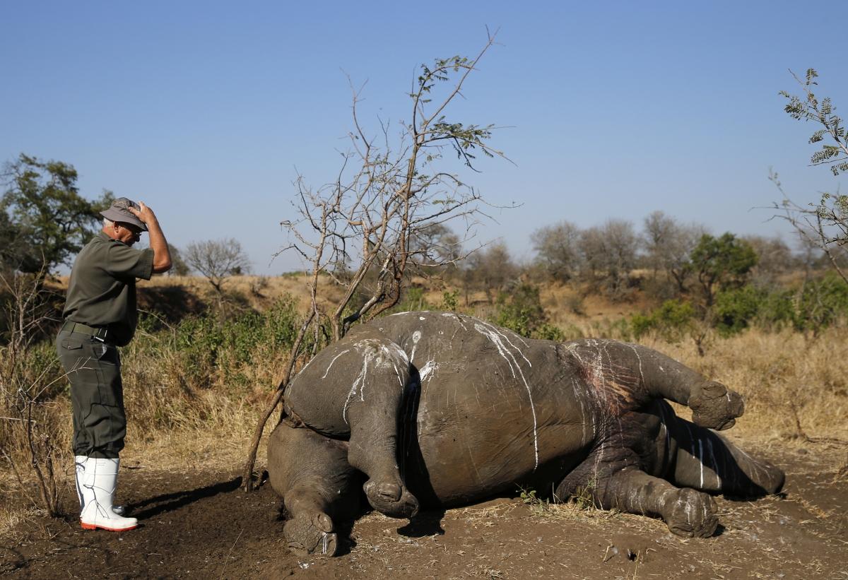dead rhino kruger