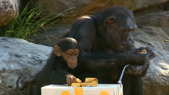 Taronga Zoo animals