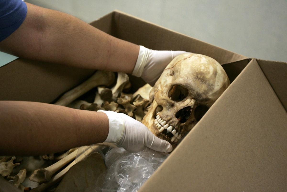 man stole human skeletons