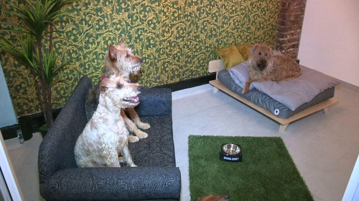 Dog Spa Hotel Uk