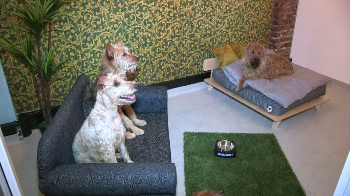 Cape Town Dog Hotel