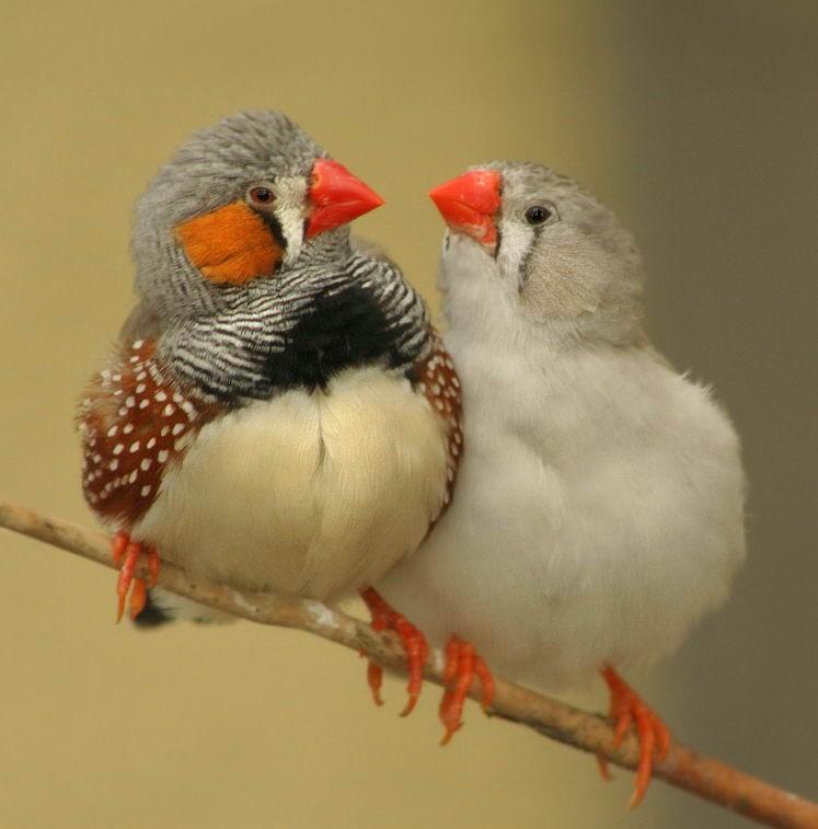 Bird Gay 63