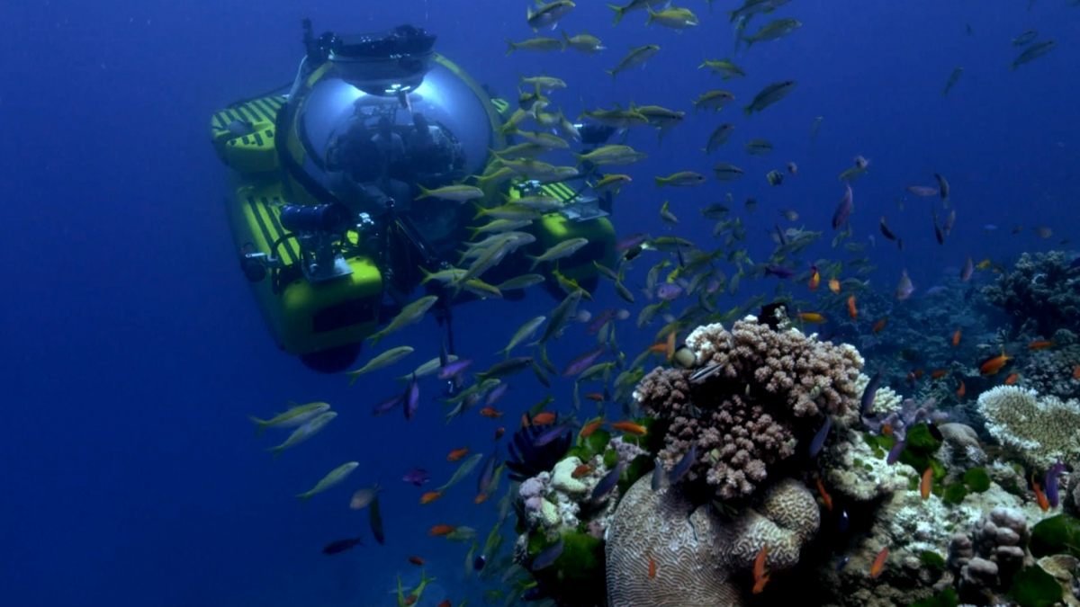 Virtual reality reef