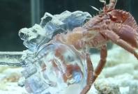 3D printed shells
