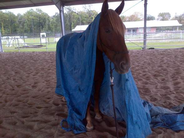 Patrol horse Charlotte