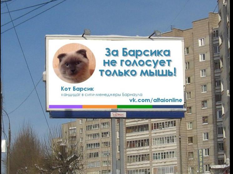 Barsik the cat