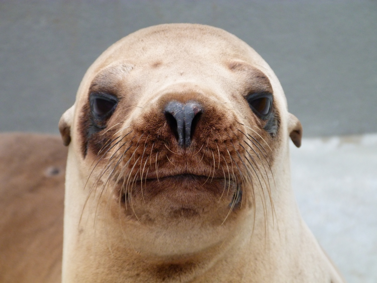 Katerin the sea lion