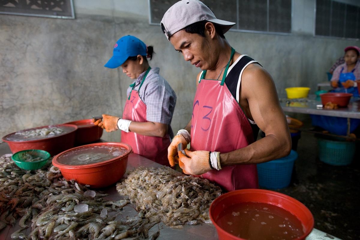 Thailand shrimp industry
