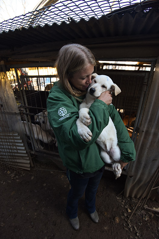 Korea dog meat
