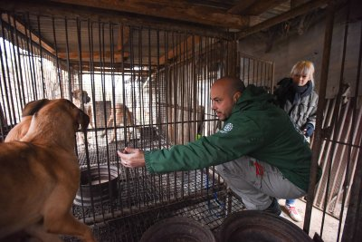 Korea dog meat