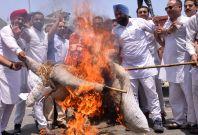 Congress activists burn Narendra Modi effigy
