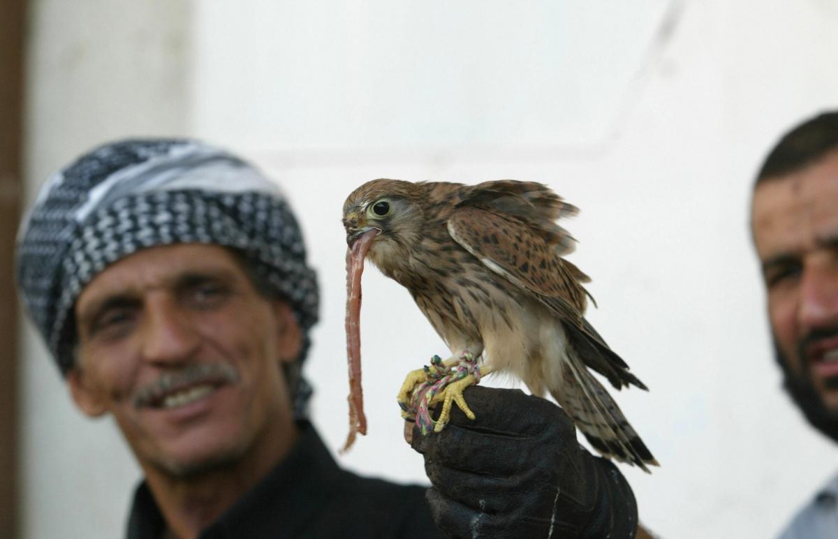 Falconry in Iraq